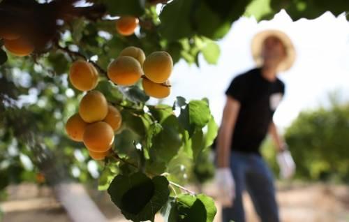 Абрикос: посадка и уход, как сажать в открытом грунте, пошаговая инструкция, сроки посадки